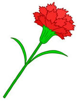 Mother's Day, Carnation, Red carnation, Present on Mother's Day, Mother's Day gift, Thanks to mother