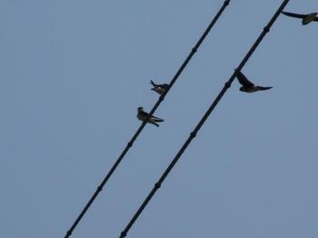 090603birds.JPG