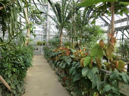 筑波植物園