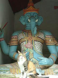 2006 chiangmai cat with god