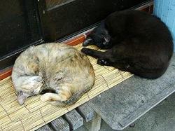 2006 yonago cats in sakai-minato