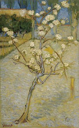 Small_pear_tree_in_blossom_188.jpg