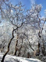 綿向山樹氷