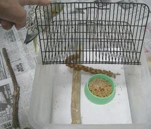 80123-cage.JPG