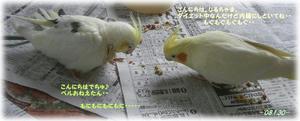 80130-riru2.JPG