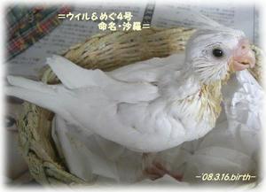 80409-shara.JPG