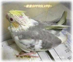 80426-juri1.JPG