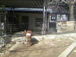 五月山動物園3