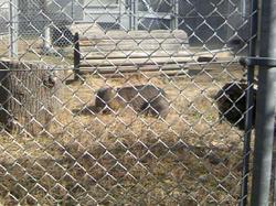 五月山動物園5