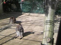 五月山動物園6