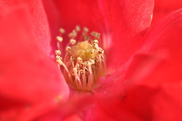 薔薇の世界4