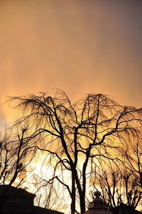 夕暮れに立つ木
