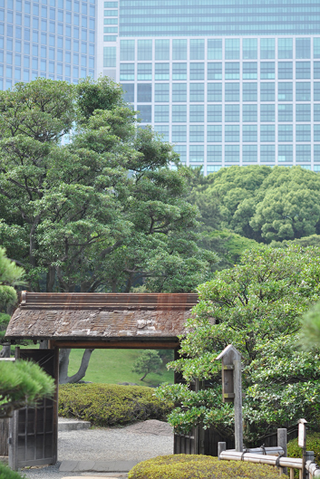 純和風の門と高層ビル
