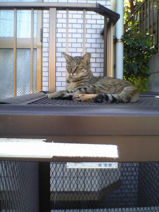 カゴの上の猫2