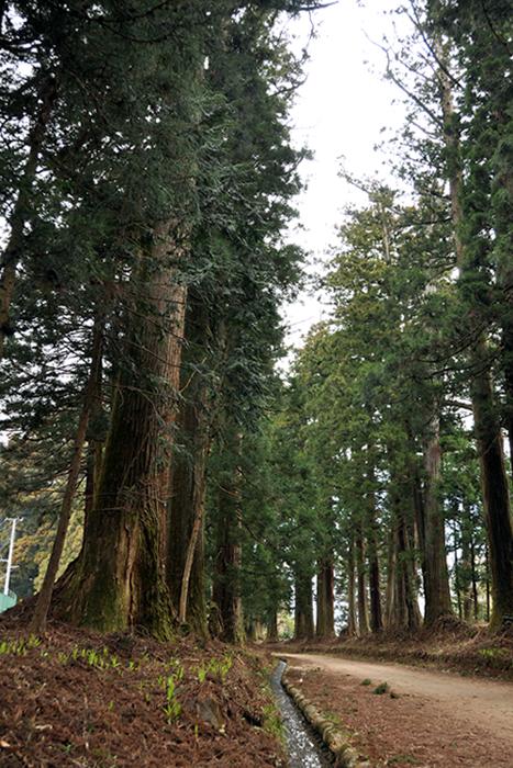 日光の杉並木