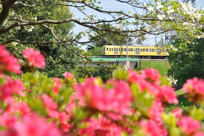 花と鉄道2