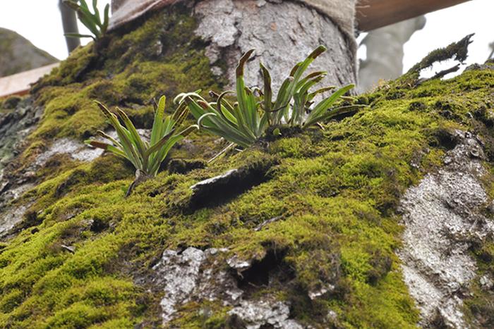 木に生える植物