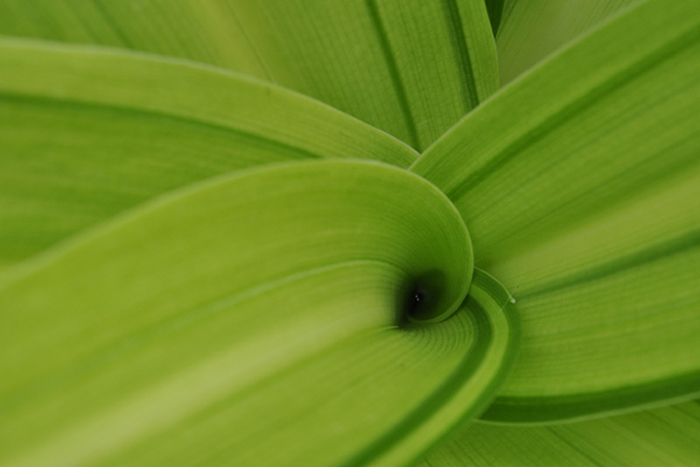 葉のカタチ3