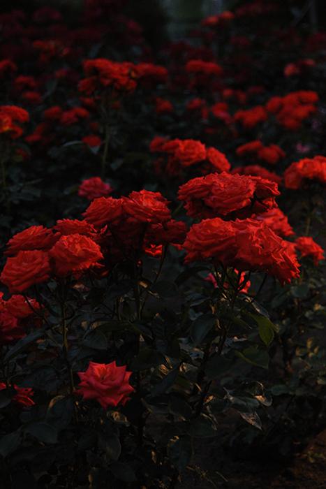 夜に咲く8