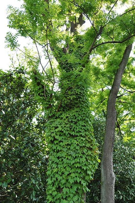 葉っぱだらけの木