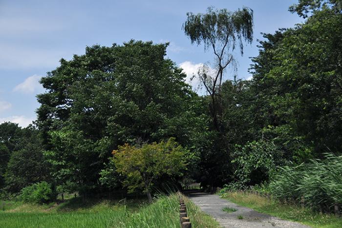 柳のある風景