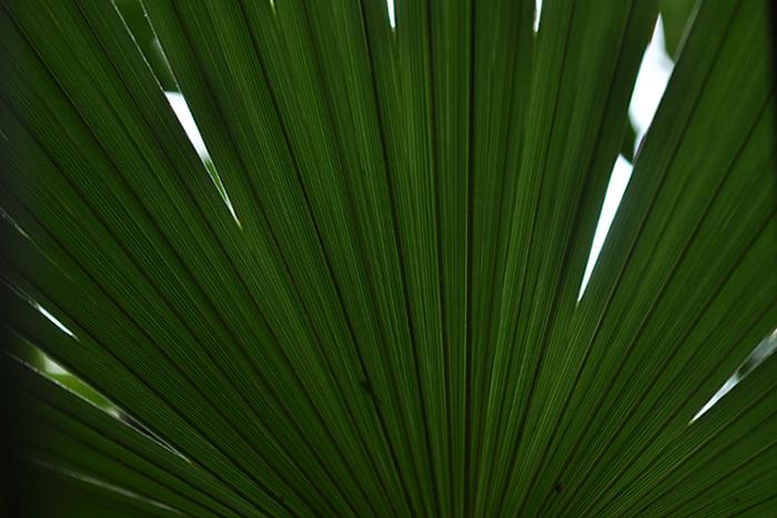 葉のカタチ11