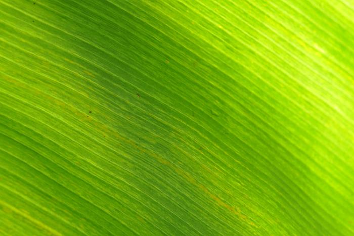 葉の彩14