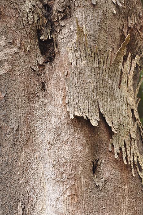 木の肌10