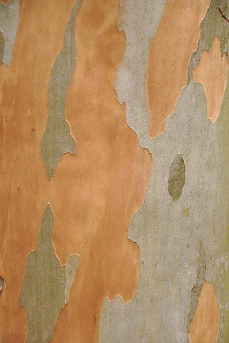 木の肌11