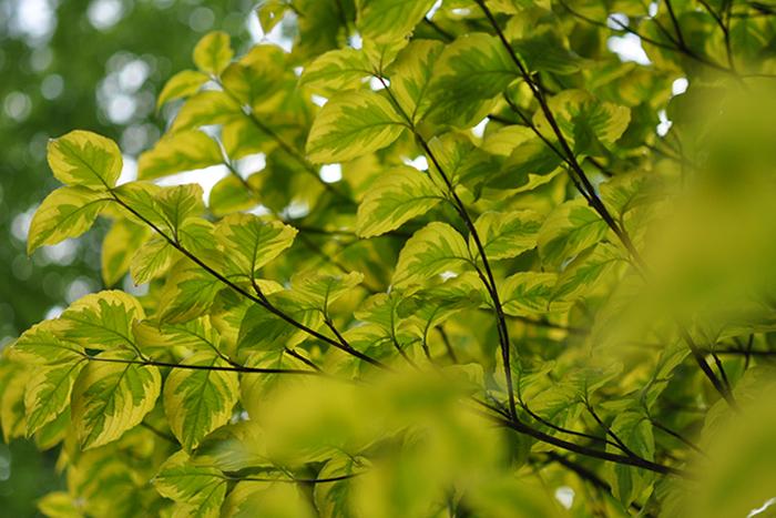 葉の彩17