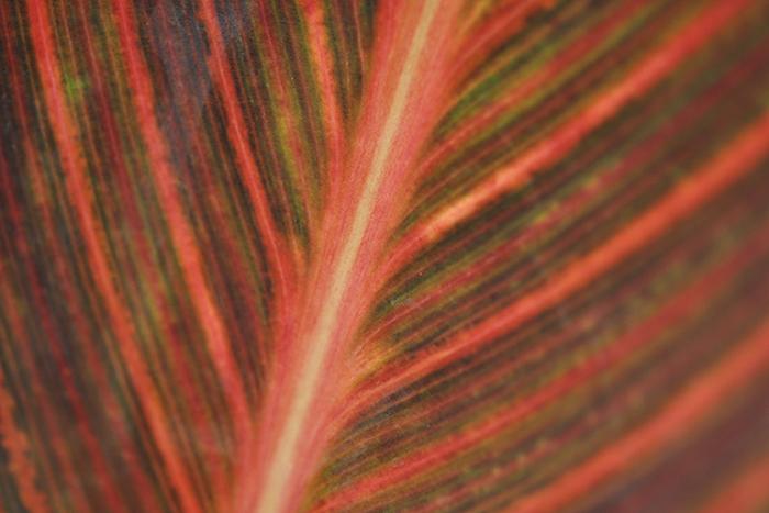 葉の彩19