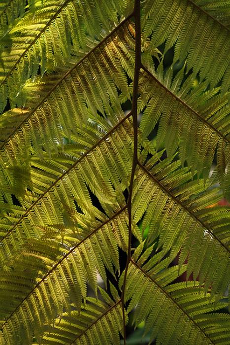 葉のカタチ14