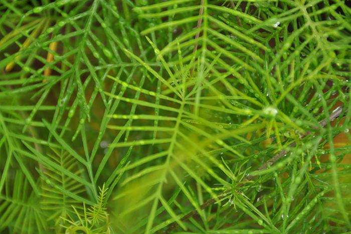 葉のカタチ16