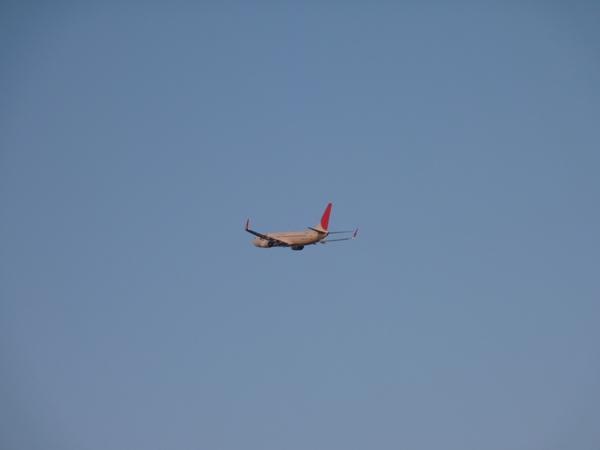 JAL B737-800 (2011/4/12 関西国際空港) 3