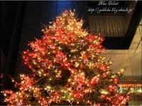 2009銀座ミキモトXmas tree 6
