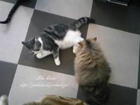 猫まるカフェ -3