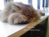 猫まるカフェ-4