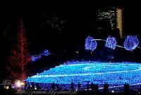 東京ミッドタウンクリスマスイルミネーション2010