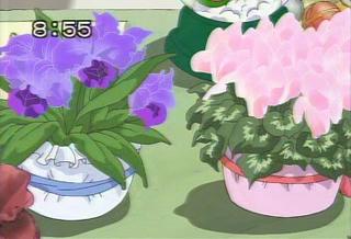 シクラメン、カトレア共に冬の花