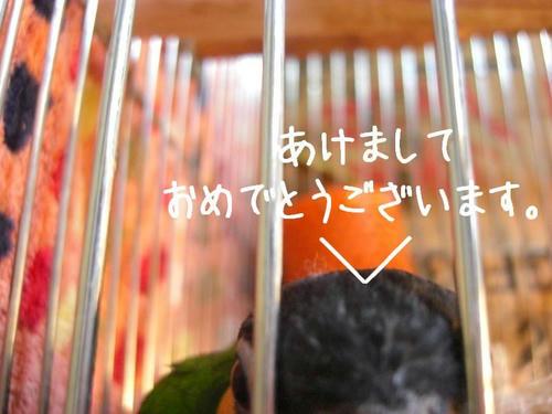 CIMG1027.JPG