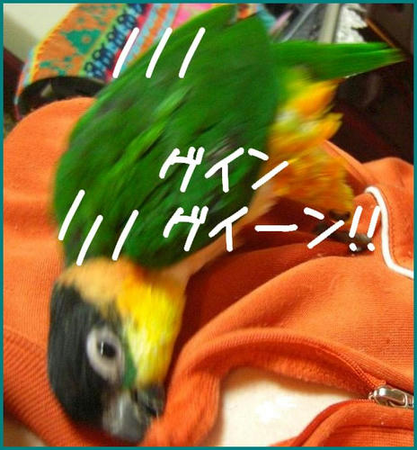 KCIMG3937.JPG