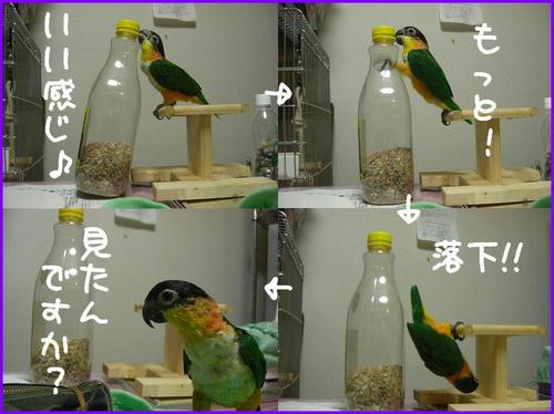 zuguronozunkiti_2.jpg