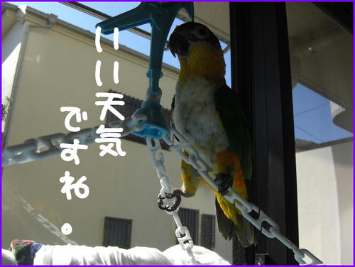 MonohoshiLand_and_aunkiti.jpg