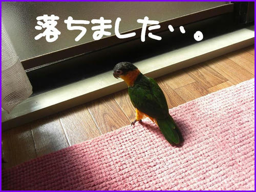 RakkaChokugoZunkiti.jpg