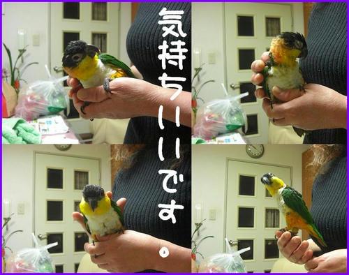 ZunkitiAndYokaiMofumofu.jpg