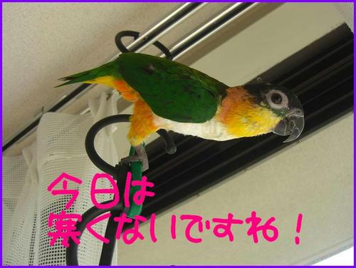 Zunkiti_Nikkoyoku.jpg