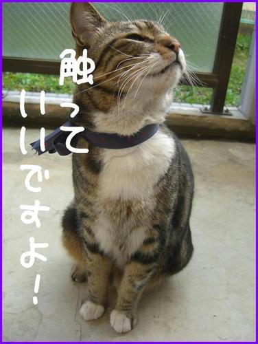 TonariNoNeko_2.jpg
