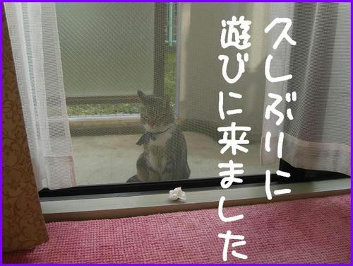 TonariNoNeko.jpg