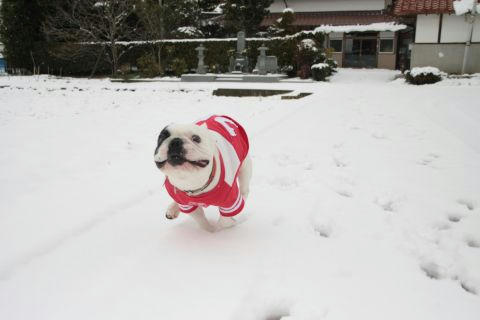 雪の日のダッシュ