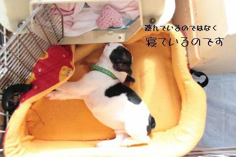 子ブタが寝ています